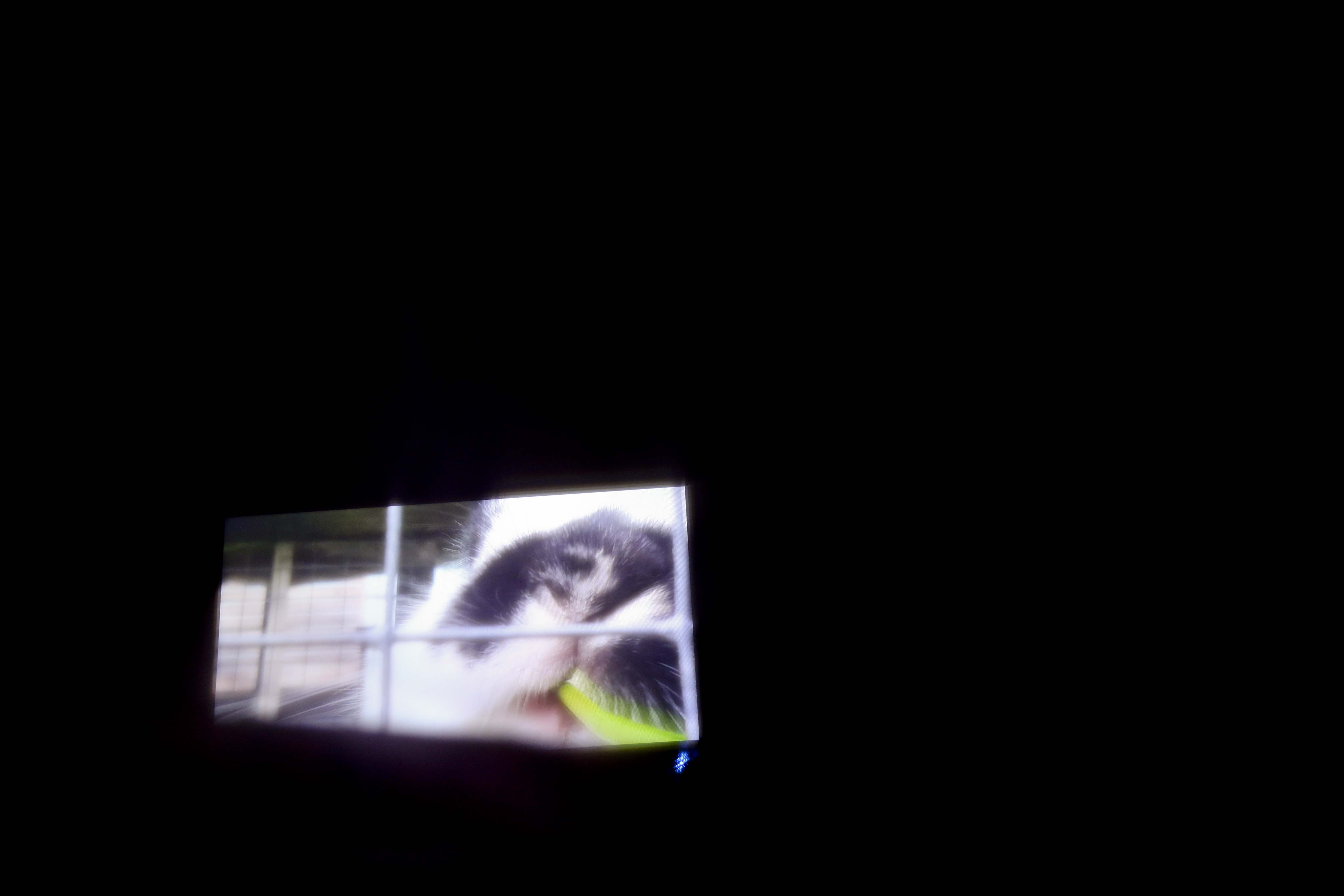 Veiw of video screen from tent